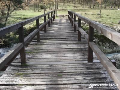 Bosque de Finlandia - Valle de El Paular;gredos rutas asociaciones senderismo rios y senderos